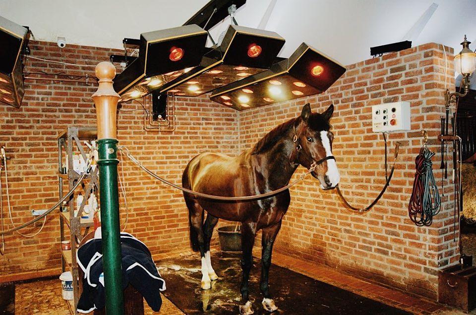 Horse solarium in use